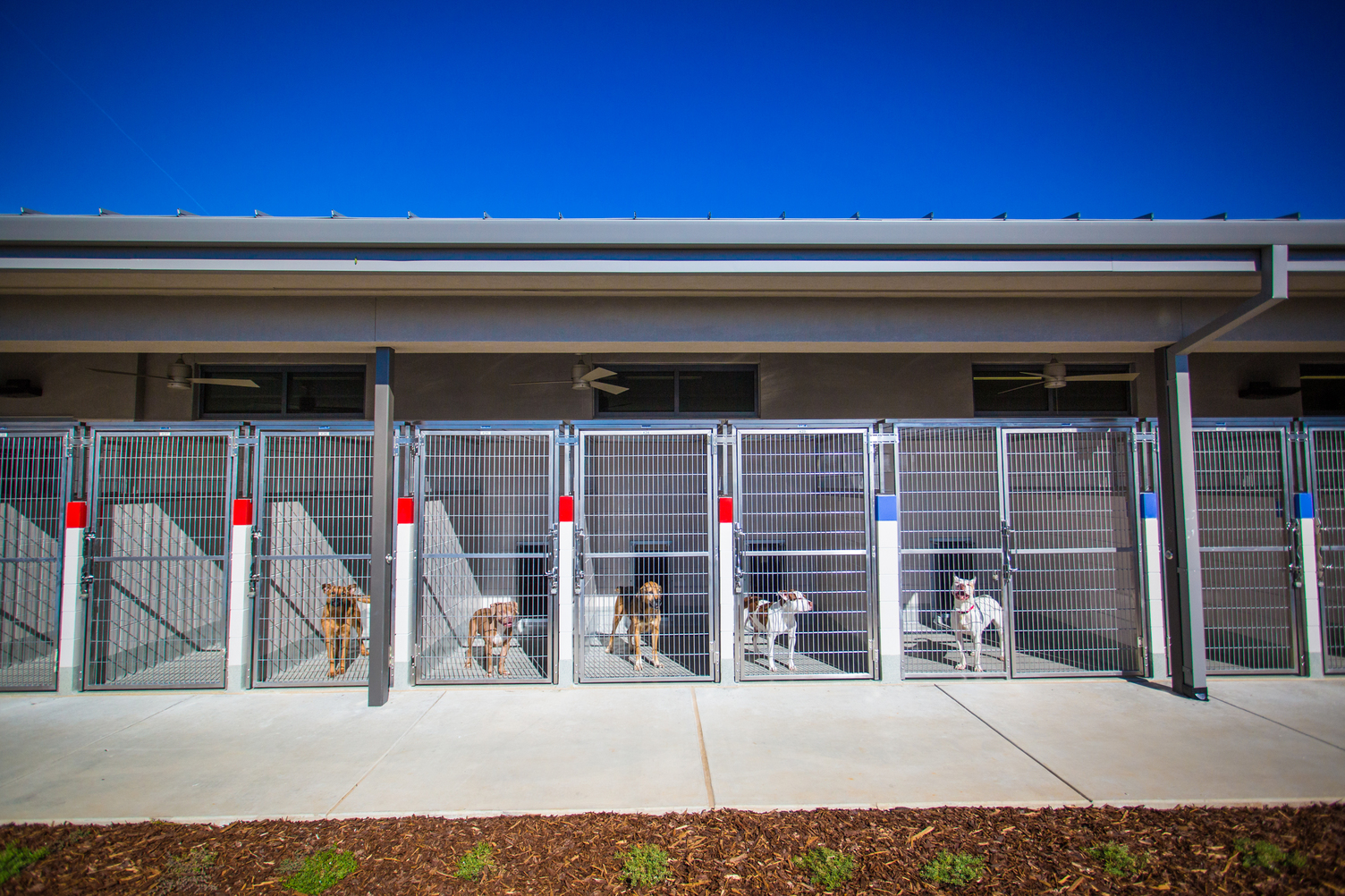 The Department Of Health And Human Services Animal Care Is Currently Hiring For Extra Help Temporary Kennel Attendant Vacancies